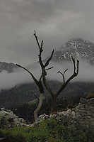 Dead tree branches and gloomy sky, Ehrenberg castle, Reutte, Austria.
