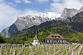 Maienfeld, Switzerland. Vineyards near the Rhine.
