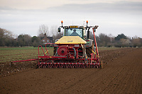 Drilling Spring Barley following sugar beet<br /> &copy;Tim Scrivener Photographer 07850 303986<br />      ....Covering Agriculture In The UK....