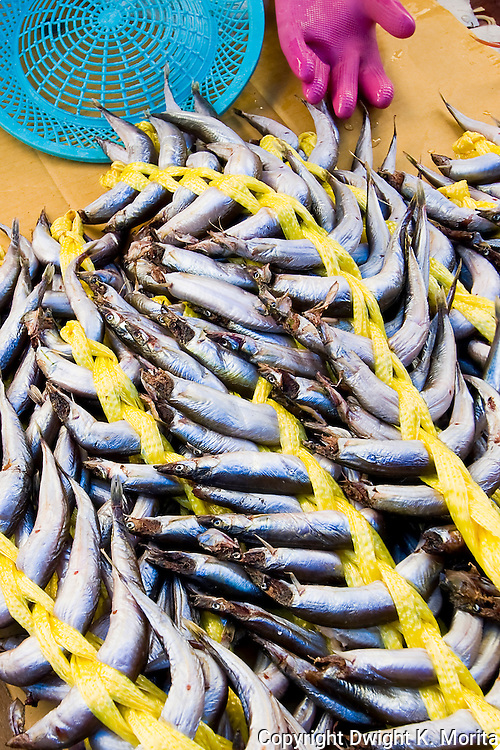 Fish tethered together for sale in a market in Wonju, Korea