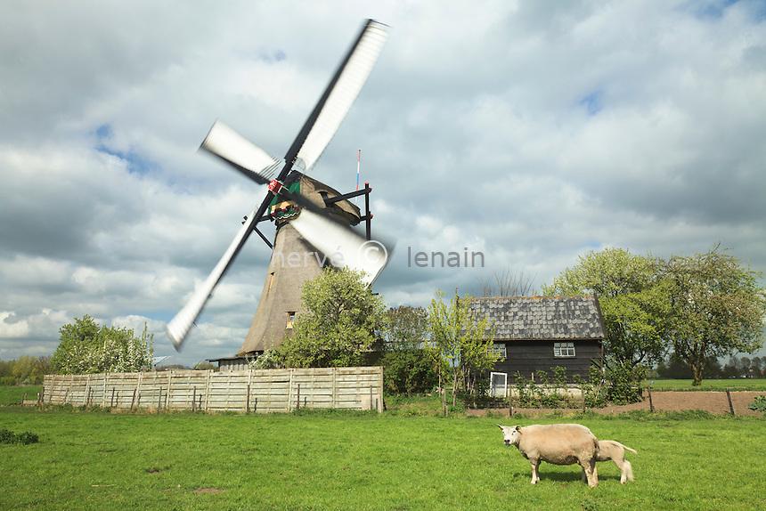 Hollande, Kinderdijk, Les moulins de Kinderdijk, site classé au patrimoine mondiale de l'UNESCO // Holland, Kinderdijk, The mills of Kinderdijk, listed as World Heritage by UNESCO