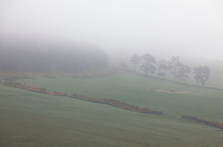 A countryside field in fog near Huntly, Aberdeenshire in Scotland, United Kingdom