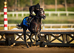 November 21, 2018: Roadster with Humberto Gomez up gallops at Santa Anita on November 21, 2018 in Del Mar, California. Evers/Eclipse Sportswire/CSM