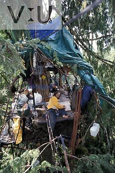 Protesters to the Winberry old-growth timber sale in Willamette National Forest, Cascade Mountains, Oregon living in a campsite 140 feet high in an old-growth tree.