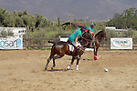 POLO COMPETITION at the RODEO