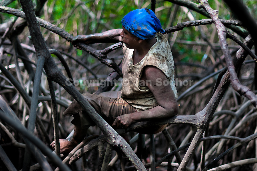 A Colombian woman climbs over the root of a tree while searching for shellfish in the mangrove swamps on the Pacific coast, Colombia, 16 June 2010. Deep in the impenetrable labyrinth of mangrove swamps on the Pacific seashore, hundreds of people struggle everyday, searching and gathering a tiny shellfish called 'piangua'. Wading through sticky mud among the mangrove tree roots, facing the clouds of mosquitos, they pick up mussels hidden deep in mud, no matter of unbearable tropical heat or strong rain. Although the shellfish pickers, mostly Afro-Colombians displaced by the Colombian armed conflict, take a high risk (malaria, poisonous bites,...), their salary is very low and keeps them living in extreme poverty.