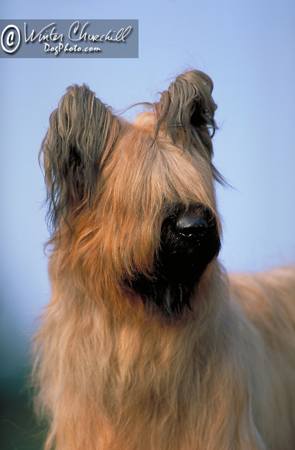 Briard Shopping cart has 3 Tabs:<br />