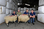 FARMING INDEPENDENT:  Pictured at the Kerry Lamb and Wool Co-Op at Lispole, Dingle, County Kerry were from left, John Moriarty, James Brosnan, Chairman, Sean Moriarty and Pat Lovett.<br /> Picture by Don MacMonagle<br /> Story by Majella O'Sullivan