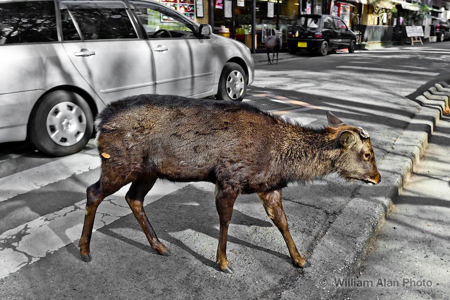 Deer in Nara Japan January 2010