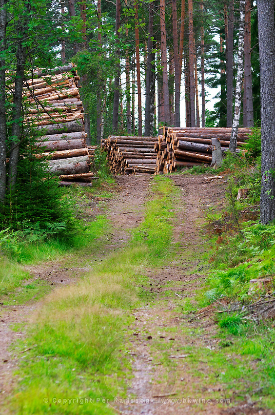 Country road. Stacks of timber. Through the forest. Smaland region. Sweden, Europe.