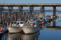 Gillnetters Fishing Boats, Astoria Marina, Oregon, USA.