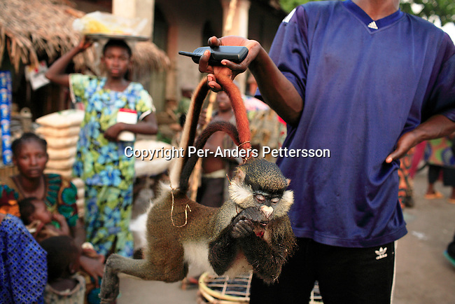 BUMBA, DEMOCRATIC REPUBLIC OF CONGO MARCH 25: An unidentified man has just bought a dead monkey at an animal market on March 25, 2006 outside Bumba, Congo, DRC. Monkeys are a popular food for Congolese but its quite expensive. Bumba is an important port between Kisangani and Kinshasa, a distance of about 1750 kilometers. The Congo River is a lifeline for millions of people, who depend on it for transport and trade. Congo is planning to hold general elections by July 2006, the first democratic elections in forty years..(Photo by Per-Anders Pettersson/Getty Images).