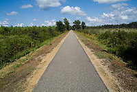 Bicycle track passing through the Landes forest, France.