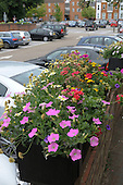 Summer flower display in the central car park in Farnham, Surrey.