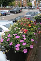 Summer flower display in the central car park in Farnham, Surrey.