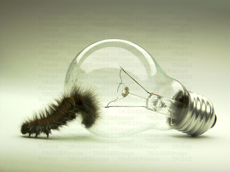 A caterpillar emerging from a light bulb