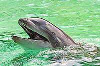 Wholphin