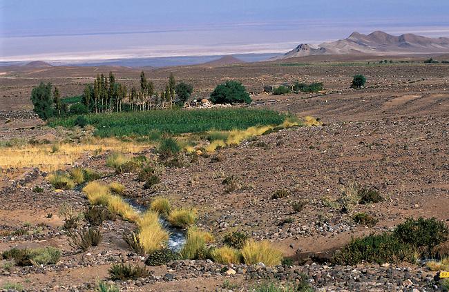 Desert de Atacama. Oasis de Socaire dans le desert. *** Oasis of Socaire in Atacama desert, Chile.