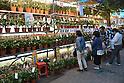 Iriya Asagao Matsuri - Morning Glory Flower Festival