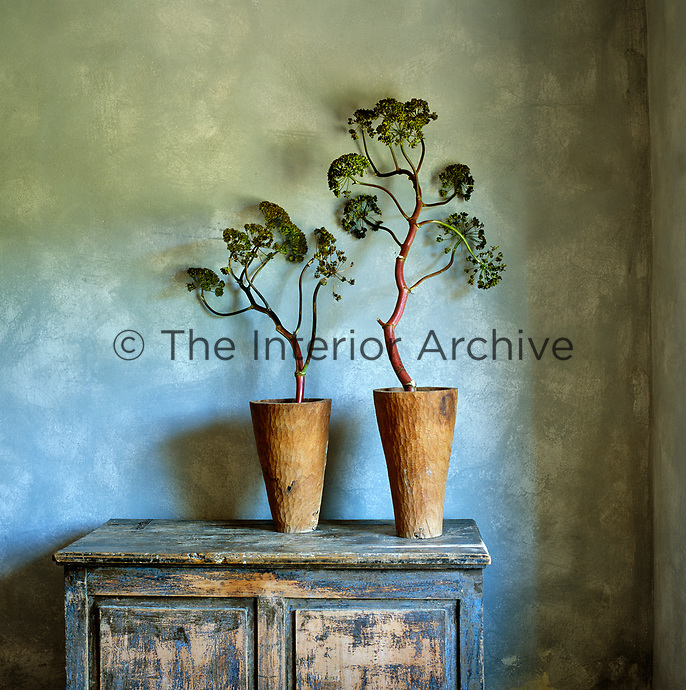 Detail of two plants in terracotta pots on top of an antique, distressed cabinet in the dining room
