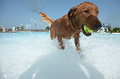 2018 Soggy Doggy Pool Party