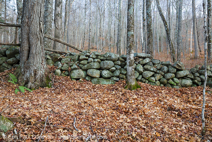 Stone wall near the abandoned Gilbert P. Wright homestead along an old road in Benton, New Hampshire. This road is located off the North and South Road (now Long Pond Road).
