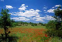 Italy, Sardinia, poppy field in Central Sardinia