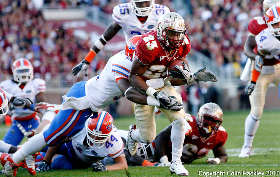 TALLAHASSEE, FL 11/27/10-FSU-UF FB10 CH-Florida State's Chris Thompson runs through a group of Florida defenders during first half action Saturday at Doak Campbell Stadium in Tallahassee. .COLIN HACKLEY PHOTO