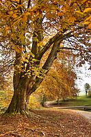 Autumn in Eastvile Park, Bristol
