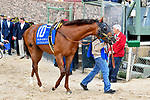 HOT SPRINGS, AR - APRIL 14: Oaklawn Handicap. Oaklawn Park on April 14, 2018 in Hot Springs,Arkansas. #10 Accelerate (Photo by Ted McClenning/Eclipse Sportswire/Getty Images)
