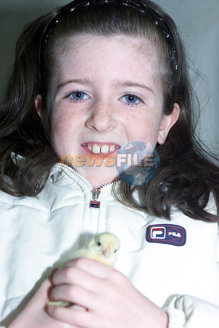 Suzanne Caffrey Holding one of the little chicks at newgrange Farm..Pic Fran Caffrey Newsfile