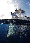 sportfishing mag shark