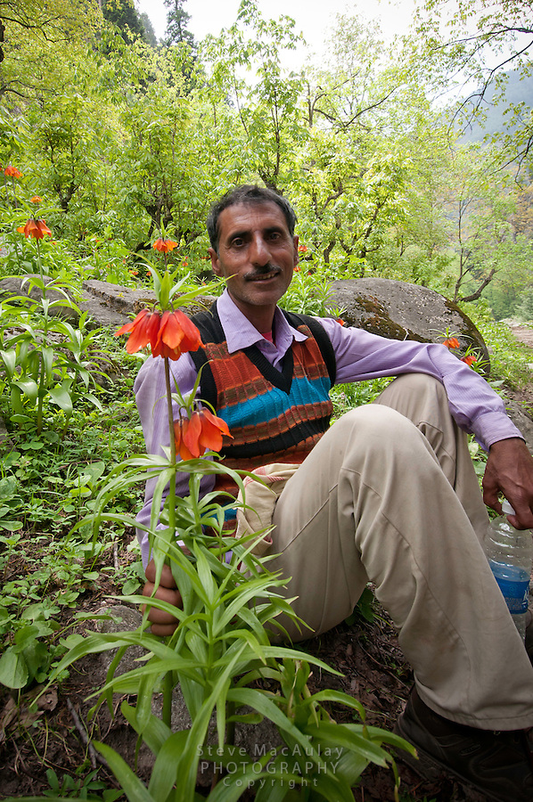A Kashmiri guide relaxes amid a group of unusual hanging lilies, Gangabal Lake region of Kashmiri Himalayas, India.