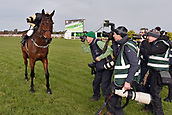3rd February 2019, Leopardstown, Dublin, Ireland; Bellshill with Ruby Walsh up after winning the Irish Gold Cup in focus of the racing photographers. Leopardstown racecourse.