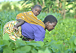 A baby on her back, a woman works in her field near Kajumi, in northern Malawi.
