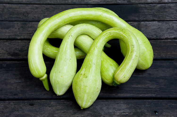 Curved, trombone-shaped courgette 'Tromboncino'. Will grow as a climber and can be stored for winter use if the skin is hardened off. Sometimes known by its full name 'Tromboncino d'Albenga'.