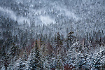 Winter scene in the White Mountain National Forest, New Hampshire, USA