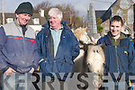 HORSES: John Gorman and Chris Reilly, Ballybunion, and Enda Donegan, Causeway, enjoying themselves at the Horse Fair in Killorglin last Saturday..