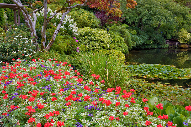 Flowers and pond. Butchart Gardens, B.C. Canada