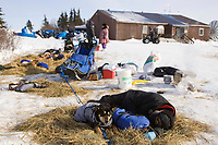 Musher sleeps with dogs in the Koyuk dog lot on Friday during Iditarod 2008