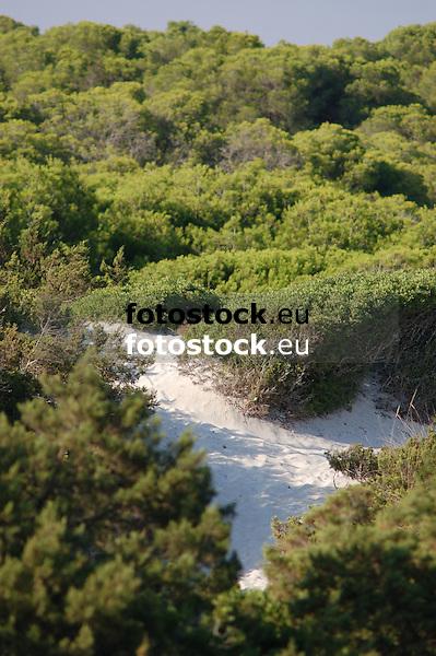 Dunes of Es Trenc<br /> <br /> Dunas de Es Trenc<br /> <br /> D&uuml;nen von Es Trenc<br /> <br /> 3008 x 2000 px<br /> 150 dpi: 50,94 x 33,87 cm<br /> 300 dpi: 25,47 x 16,93 cm