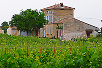 Chateau Lafleur  (la fleur) a view across the vineyards  Pomerol  Bordeaux Gironde Aquitaine France