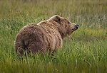 NEW! Bears in Alaska!