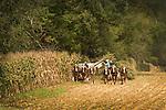 Sugar Valley. Amish harvesting corn.
