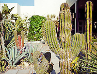 A walled garden is filled with a varied collection of cacti set in gravelled flowerbeds amongst paths constructed with concrete paving stones