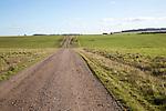 Unsurfaced track road chalk upland landscape near Everleigh, Salisbury Plain, Wiltshire, England, UK