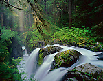 Olympic National Park, WA: Sol Duc Falls with shafts of sunlight reaching the forest understory