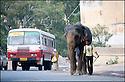 2006- Inde- sur la route de Agra.