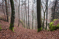Foggy autumn forest, Franconia, Germany