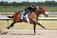 #13Fasig-Tipton Florida Sale,Under Tack Show. Palm Meadows Florida 03-23-2012 Arron Haggart/Eclipse Sportswire.